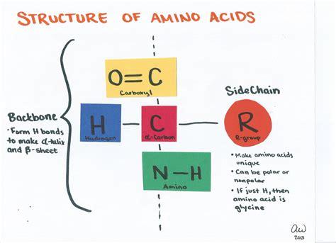 diagram of amino acid cell biology study guides s biology study guides