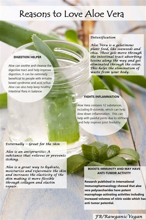 Aloe Vera Benefits Detox by 26 Wonderful Benefits Of Aloe Vera Juice Ghritkumari Saar