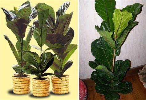 imagenes de plantas verdes de interior plantas de interior decora 231 227 o da casa