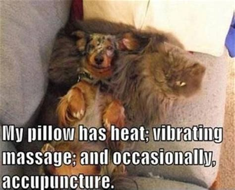 Dog And Cat Memes - my pillow has heat dog and cat memes