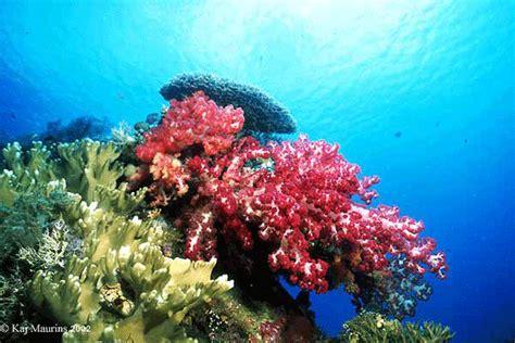 Ikan Bawah Laut 9 bunaken surga bawah laut indonesia apentour informasi