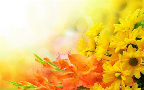 background kuning bunga  background check