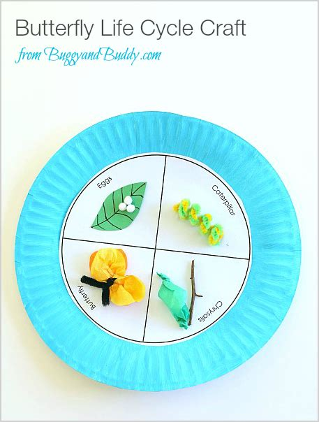 Paper Butterfly Craft - butterfly cycle paper plate craft crafts