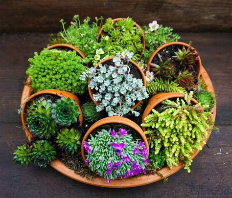 Dish Garden Ideas 17 Best Images About S About Succulents On Agaves Plants And Succulents