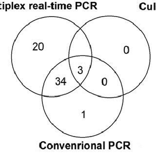 multiplex real time pcr assay  detection  differentiation  bordetella pertussis