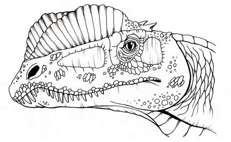 dinosaur coloring book for sale elaine in the membrane