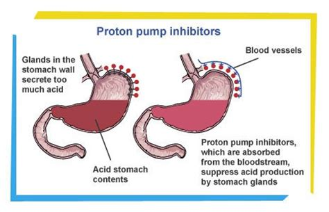 How Proton Inhibitors Work by Did Midterm Election Results Give President Obama Acid
