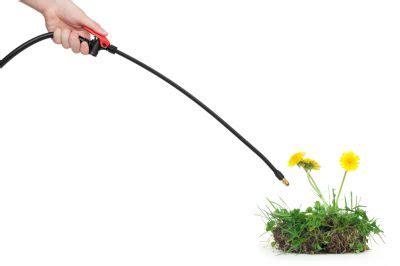 Rasen Unkraut Vernichten 400 by Sauerklee Bek 228 Mpfen 187 So Werden Sie Ihn Dauerhaft Los