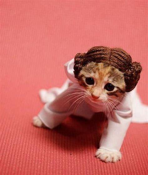 pug princess leia princess leia kitten pet costume wars pug parade pictures pics