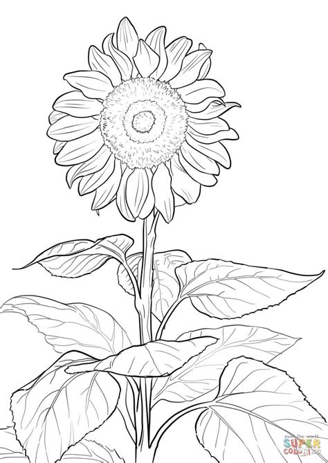 Coloring Page Ideas by Sunflower Coloring Craft Ideas