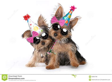 yorkie clipart yorkie birthday clipart clipart suggest
