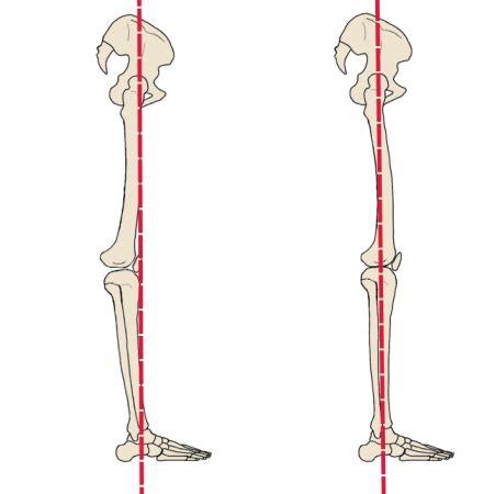 cadenas musculares rodilla en yoga 191 las rodillas deben estar bloqueadas o