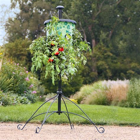 topsy turvy tomato planter size topsy turvy tomato tree the green