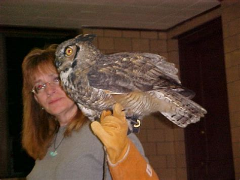 best suited owl as a pet bird about pet life
