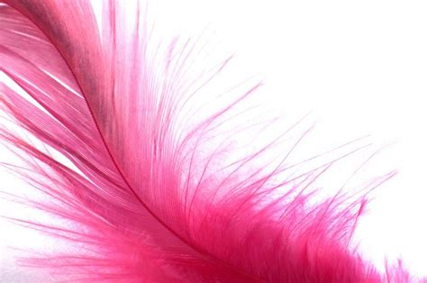 Peacock Home Decor pink feather wall mural majestic wall art