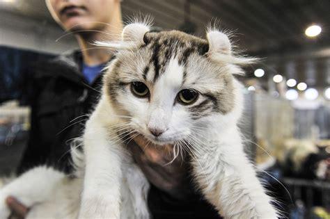 i gatti pi 249 belli mondo in mostra a vanityfair it