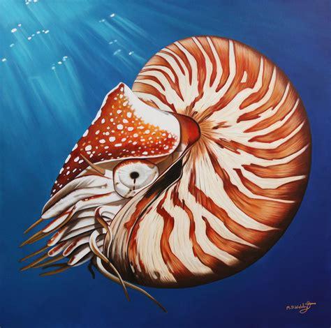 image gallery nautilus art
