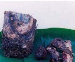 Bibit Puyuh Pare pengkerodongan buah pisang dengan plastik agrokompleks mmc