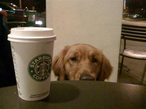 dogs and coffee 10 restaurants coffee shops with secret menu items for dogs iheartdogs