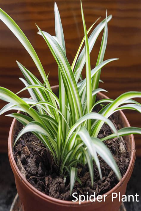 plants that don t need sunlight 100 plants that don t need sunlight to grow 25