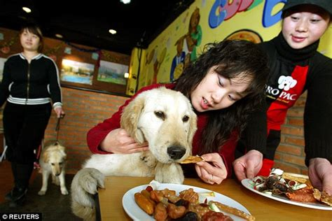 restaurants that allow dogs city of changzhou announces single policy resolve canine noise issues