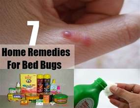 home remedies for bed bug bites 7 home remedies for bed bugs treatments cures