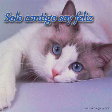 imagenes lindas de amor de gatitos imagenes amorosas de gatitos imagui