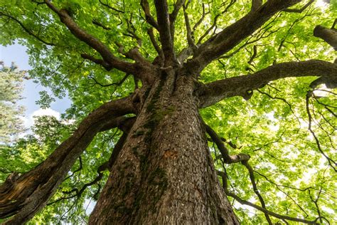 where to buy a tree tree management tree warden hailsham town council