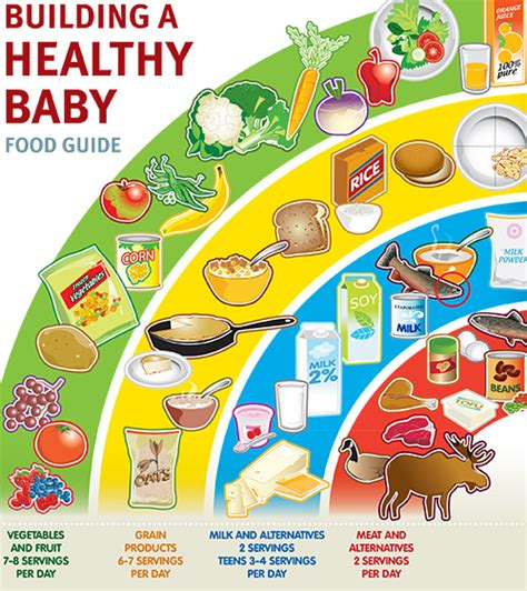 building a healthy baby food guide sant 233 terres cries