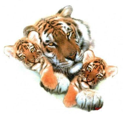tiger cub tattoo designs tiger print tat with cub from