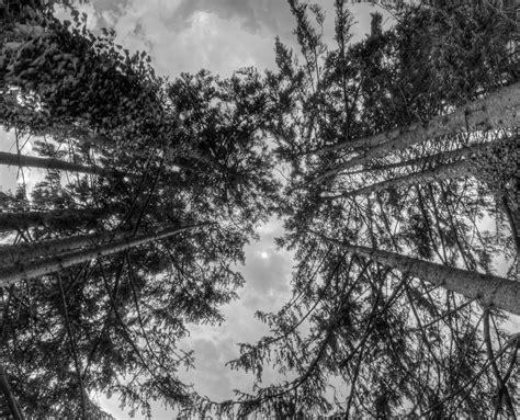 kostenlose foto baum natur wald ast licht stra 223 e sonnenlicht blatt blume gr 252 n kurve kostenlose foto baum natur wald ast schnee winter schwarz und wei 223 himmel fotografie