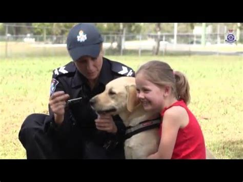 7 Qas On Pets by Queensland Trial Personal Transporters Queensland