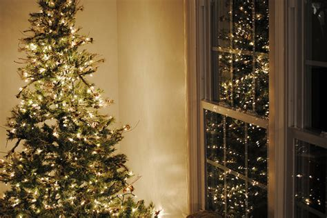christmas tree by the window pictures photos and images