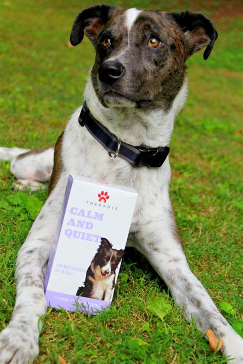when will my puppy calm how to keep your calm during fireworks miss frugal
