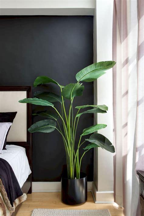 apartment indoor gardening  tropic indoor plants