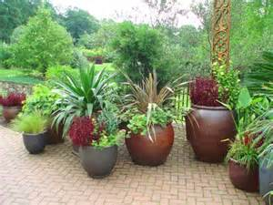 Large Potted Plants For Patio by 90 Best Images About Flower Pot Ideas On Pinterest