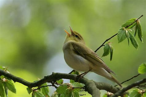 which birds that sing in the morning 17 april 2014 the way of