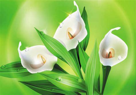 Imagenes Flores Hermosas 3d | hermosas flores 02 vector free download