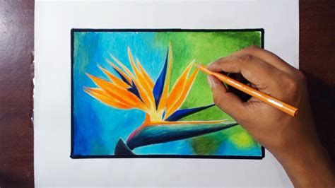 color of paradise drawing paradise bird flower prismacolor pencils