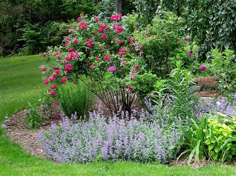 rose companion plants learn about companion planting for