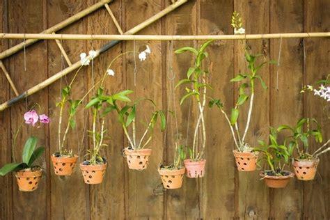 cura delle orchidee in appartamento tipologie di vaso per orchidee piante appartamento