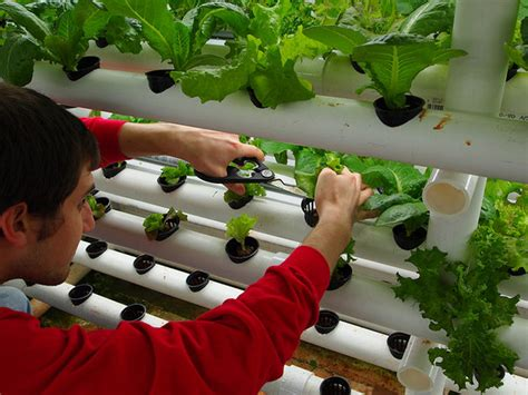 indoor garden technology geeky gardening how to grow vegetables with green technology thecoolist the modern design