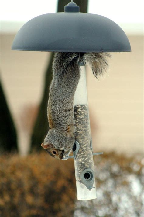 tips on keeping squirrels out of birdfeeders