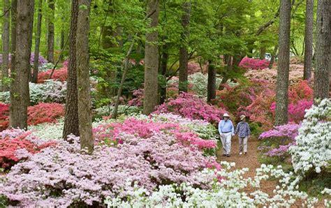 Callaway Gardens Pine Mountain callaway gardens pine mountain