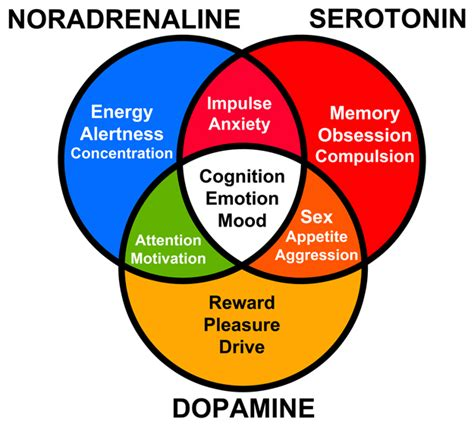 chemical imbalance mood swings what causes depression brain chemistry and