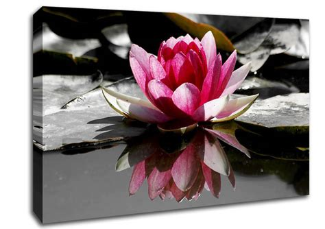 Pink Black And White Wall Decor by Black And White Wall And Wall Decor Wallartdirect Co Uk