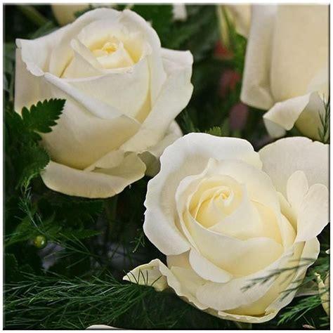 imagenes de flores blancas significado rosas rojas y blancas significado buscar con google