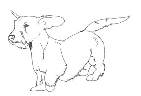 dachshunds colouring pages