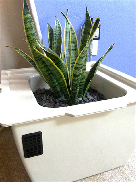 reviews  houseplant  air cleaner review