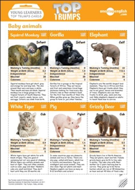 printable animal top trump cards top trumps onestopenglish
